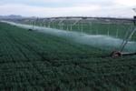 تجهیز ۶۵۰۰ هکتار از اراضی کشاورزی دره شهر به سیستم آبیاری نوین