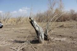 تشکیل ۶ پرونده قضایی برای قطع تاغزارهای روستای نامن