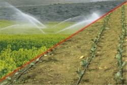 دو هزار هکتار از اراضی کشاورزی به سیستم آبیاری نوین مجهز می شوند