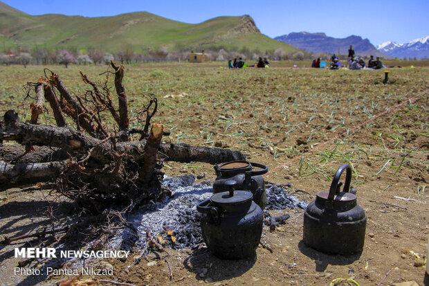شهر نيسان وبداية موسم غرس البصل