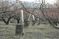 خطر سرمازدگی باغات در چهارمحال و بختیاری وجود دارد