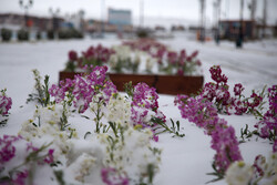 Springtime snow falls across Ardebil