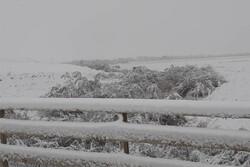 بارش برف تا بعد از ظهر در خراسان شمالی ادامه دارد