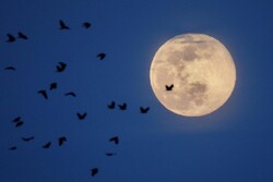 VIDEO: Pink supermoon offers respite from coronavirus fears
