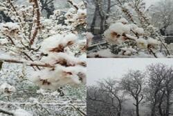 تساقط ثلوج ربيعية في العاصمة الايرانية