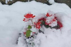 صوبہ مرکزی کے مختلف حصوں میں برف باری