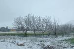 دمای شهر یاسوج به منفی ۶.۴درجه سانتیگراد رسید/ سرما ادامه دارد