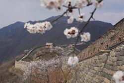 وێنەی جوانی دیواری چین لە بەهار
