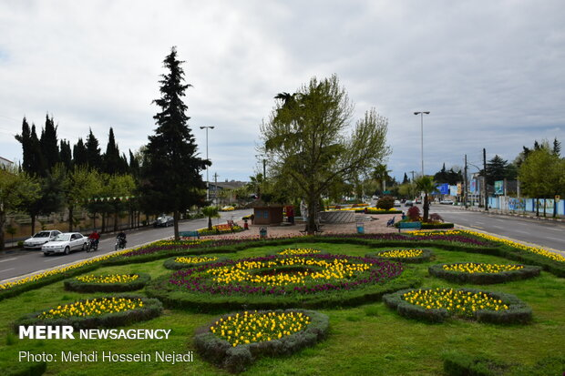Central park of Astara decorated with tulip flowers