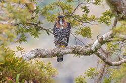 ۵ گونه پرنده جدید در استان مرکزی  مشاهده و ثبت شد