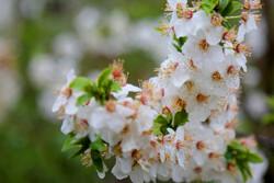 Erdebil'in ilk bahar doğasından fotoğraflar