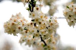 Spring flowers in Ardabil