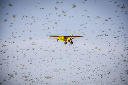 FAO scales up technical assistance to Iran on addressing Desert Locust infestation