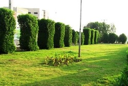 آغاز عملیات احداث بیش از ۸ هزار متر مربع فضای سبز در منطقه ۱۳
