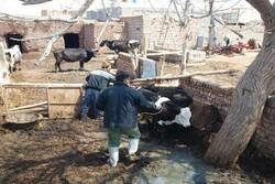 ایمنسازی و واکسیناسیون دامها در شهرستان خوشابآغاز شد