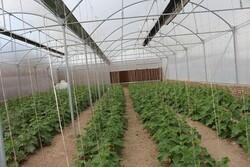 منابع آبی پایدار برای کشت گلخانه ای پارسیان اختصاص می یابد