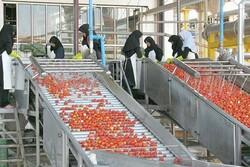 راه اندازی ۱۵۰  واحد صنایع تبدیلی در چهارمحال و بختیاری