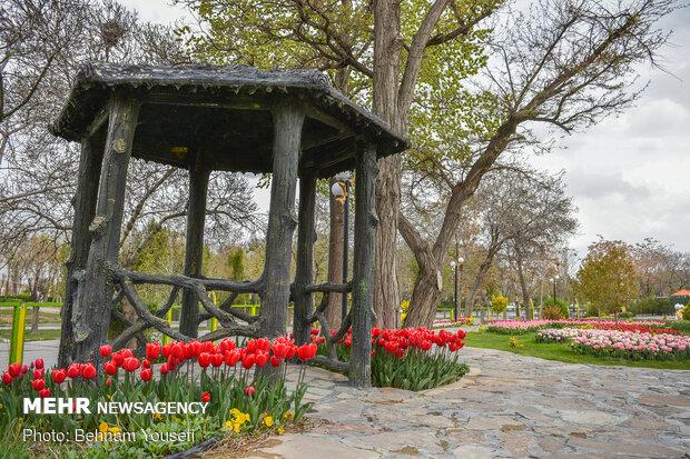 """حديقة أزهار التوليب في مدينة """"أراك"""""""