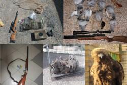 ۶۳ گونه انواع پرندگان و پستانداران از متخلفان در قزوین کشف شد