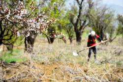İran'da geleneksel tarımcılık
