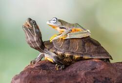 دوستیهای زیبا و عجیب بین حیوانات