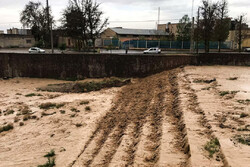 سمنان میں شدید ژالہ باری سے باغات کو نقصان