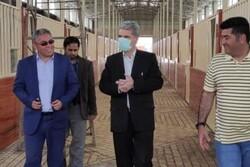 پروژه گردشگری «مزرعه پرورش اسب» بندرترکمن هفته دولت افتتاح می شود