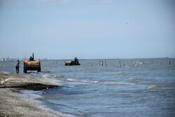 آغاز خرید حمایتی محصولات پرورش ماهی در دریا