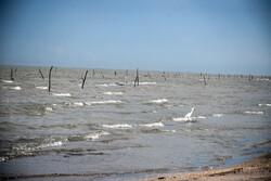 آستارا کے ساحل پر مچھیروں  کا غیر قانونی سلسلہ جاری