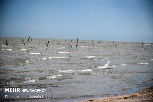 تورهای غیرمجاز ماهیگیری بلای جان ساحل آستارا