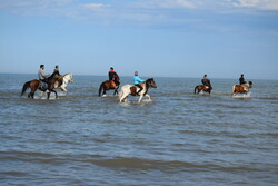 Astara'da atların su keyfi
