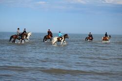 آبتنی اسب ها در ساحل صدف آستارا