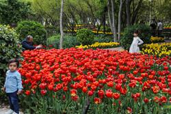 ایرانی باغ میں پھولوں کے شاندار مناظر