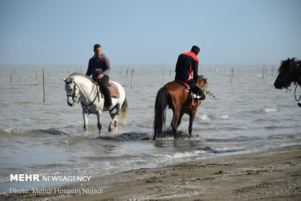 Horses enjoying Astara beaches