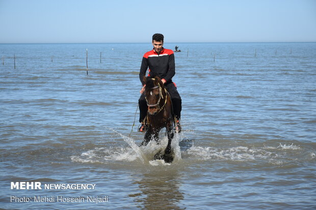 atların su keyfi