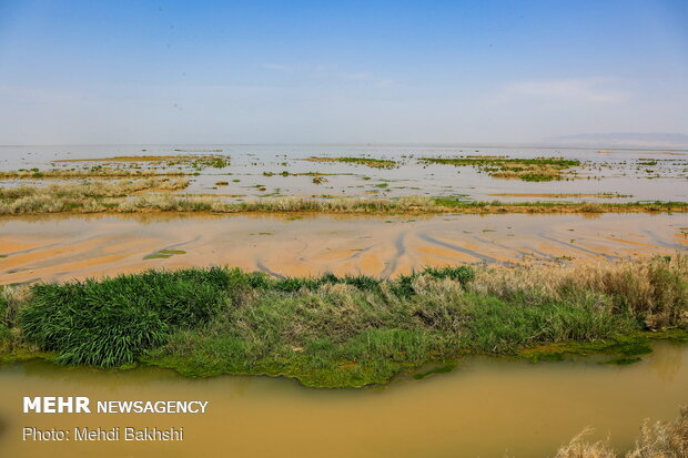 Revived Hawz Mereh wetland hosts migratory birds