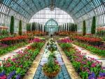 ۵.۳ میلیون دلار گل سرخ بهار امسال صادر شد