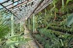 توسعه و بهرهبرداری از ۴۶۰۰ هکتار گلخانه در سال جهش تولید