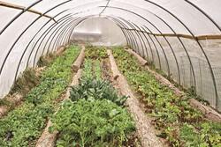 کاهش بارندگی موجب گرایش کشاورزان به سمت توسعه گلخانه ها شده است