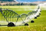 برداشت سالانه ۱۲۵ هزار تن محصولات کشاورزی در کرج