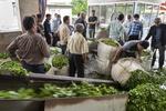 افزایش ۴۵ درصدی قیمت خرید تضمینی برگ سبز چای