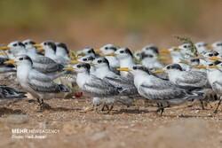 پرنده مهاجر پر از زمزمه رفتن است/ تعامل با طبیعت را یاد بگیریم