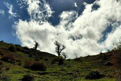 «جنگل اولنگ» تجربهای زیبا در دل شاهرود