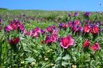 آذربایجان بهشت داروهای گیاهی/ استانداردسازی دروازه ورود به اقتصاد جهانی