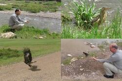 یک بهله عقاب طلایی و سه قطعه بوتیمار کوچک به طبیعت بازگشتند