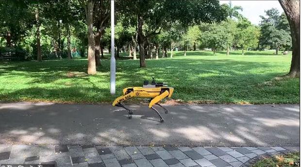 سگ رباتیک «فاصله گذاری اجتماعی» را به عابران یادآوری می کند