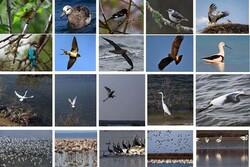 فناوری فضایی به شناسایی زیستگاه پرندگان مهاجر کمک میکند
