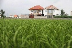 شناسایی ۷۰۰ مورد تغییر کاربری غیر مجاز اراضی کشاورزی در لرستان