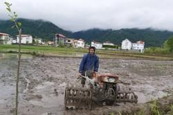 کشت مکانیزه ۱۰۰ هزار هکتار از مزارع برنج در مازندران