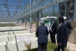 توسعه و احداث شهرکهای گلخانهای در لرستان دنبال میشود